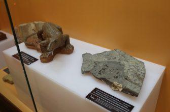 Выставка «Палеонтология Удмуртии»