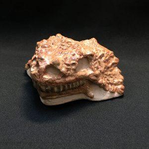 Череп парейазавра