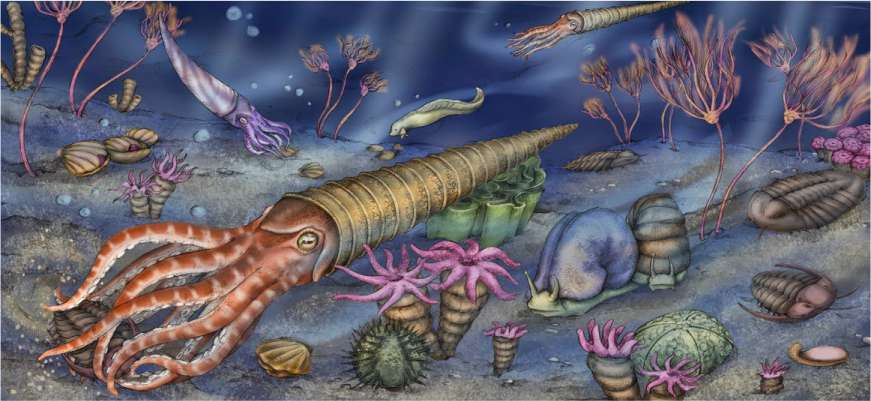 Обитатели древних морей