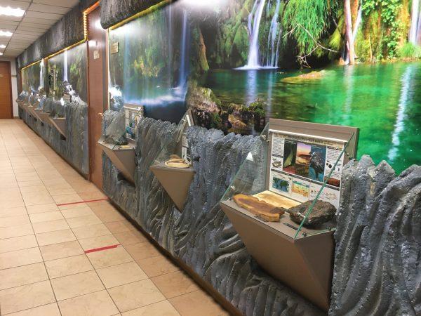 Выставка амфибии коридор