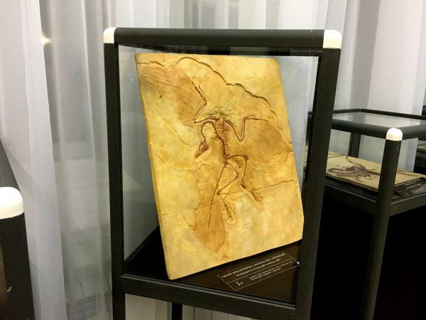 """Скелет археоптерикса на выставке """"Древняя жизнь"""" в г. Сарапул"""