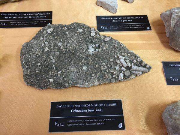Выставка «Палеонтология Кировской области» открылась в посёлке Афанасьево